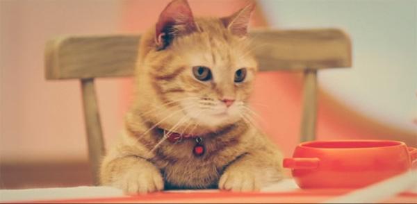 にゃにゃにゃー!人気声優のモフモフなネコちゃんたちが可愛すぎる【動画】