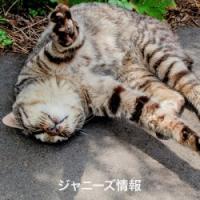 「SMAP×SMAP」稲垣吾郎の単独出演でファンの頭によぎった「9月解散説」