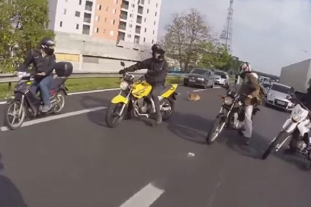 【ビデオ】見た目と違って実は心優しい!? バイク乗りのグループが高速道路で迷子犬を救出
