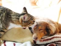 WEB上ではなぜ猫のほうが人気? 犬派より猫派が多く見えるのには理由があった