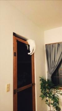 キッチンに侵入を試みた猫 ドアの隙間に挟まる衝撃的な姿で発見される
