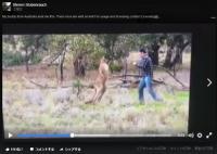犬をヘッドロックしていたカンガルー 飼い主のパンチを顔面に食らい撃退される