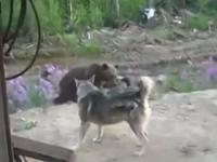 熊に襲われた男たちが死の直前に撮影した動画に映っていたものとは?