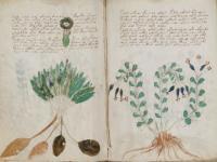未解読の奇書「ヴォイニッチ手稿」「コデックス・セラフィニアヌス」が無料でダウンロード可能に