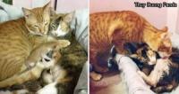 理想のラブラブ猫夫婦!愛する奥さんの子育てを必死に手助けするパパニャンコがステキ