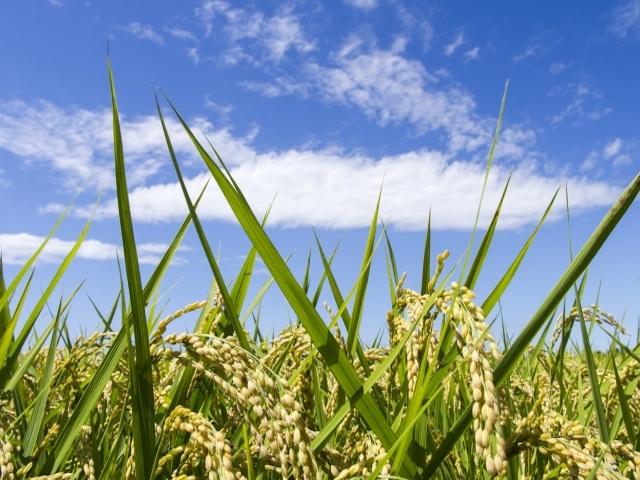 食糧自給率の目標を引き下げ-助成型農業から「稼ぐ農業」へ