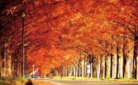 ニッポン 裏・紅葉 有名観光地のそばに紅葉の隠れた名所が… 近畿