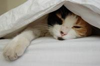 ふとんを頭からかぶって寝るのは、体に悪い?