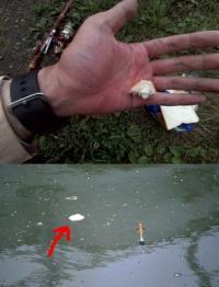 食パンをエサにして川のコイが釣れるのか