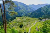 日本のマチュピチュにある「天空の茶畑」が絶景すぎる