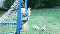 ゴールの守護神はビーグル犬! ギネス世界記録のボールさばきが凄い PR