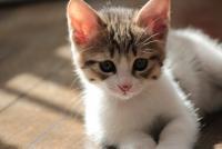 死んだ飼い猫をストリートビューで発見 お盆に起こった「奇跡」に感動広がる