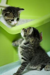 ネコがトイレ後にハイテンションになる謎行動に注目集まる