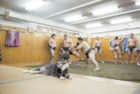世界一相撲を見ている2匹の猫「モル」と「ムギ」が大人気