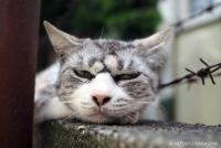 ネコに魅入られた落語家が撮る個性の強い地域猫たち