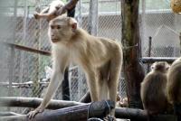 サル展示の横に野生のサル…ベトナム初のサファリパークがゆるすぎる