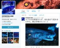 シン・ゴジラ「第二形態」のモデルとなった深海魚、沼津港深海水族館に展示