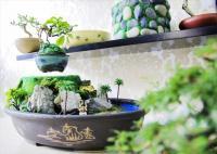日本生まれの「空飛ぶ盆栽」、ベトナムで斜め上に進化していた