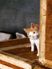 今にも動き出しそうな羊毛フェルトの猫たちに出会える猫ラボ個展