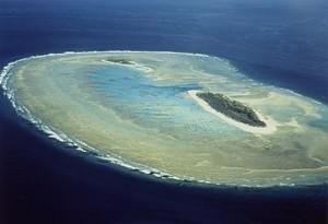 東大の茅根研究室グループが沖ノ鳥島の完全なサンゴ種リストを作成