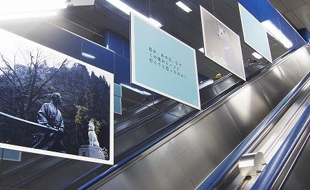 新宿で一乗谷をお父さん犬がPR 福井市、大江戸線駅構内にポスター