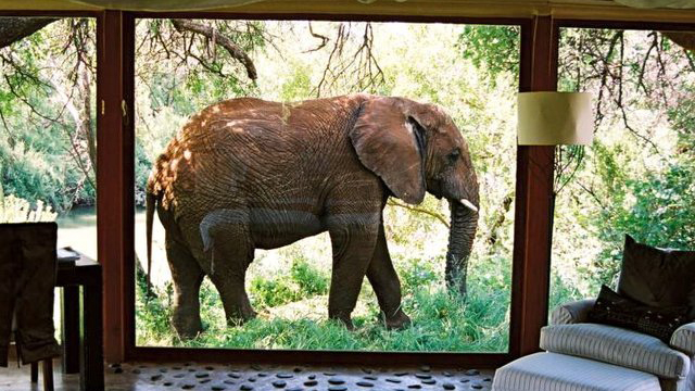ゾウは賢いゾウ…驚くべき嗅覚と記憶力で地雷撤去に貢献?
