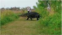 「ザトウクジラ」のあだ名で呼ばれる巨大ワニ(YouTube動画より)