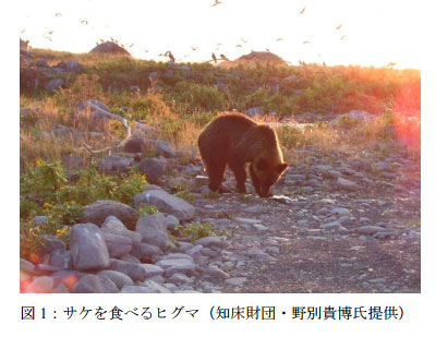 北海道のヒグマ サケは主食じゃない!? 開発で急速に草食化