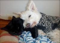 心を閉ざしひとりぼっちだった老犬を救った黒猫『タヒリア』の愛情深さに涙・・・。(6枚)