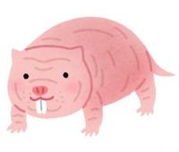 おま、本当に哺乳類!? ハダカデバネズミは無酸素状態でも18分間生き続けることが判明