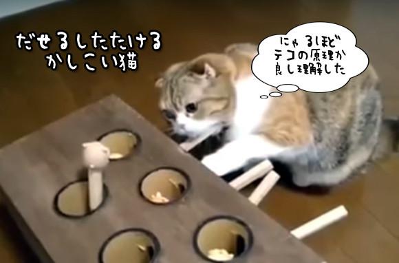 モグラを出しながらモグラを叩く。物理法則を理解した賢い猫の永久機関