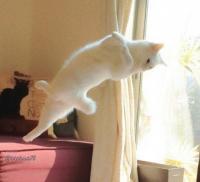 10点!10点!10ニャン点!トリプルアクセルとか余裕っぽい。極上のフィギアスケーターとしての猫