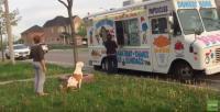 アイスだアイスだ!アイスクリームカーの前できちんと順番を待つピットブル犬