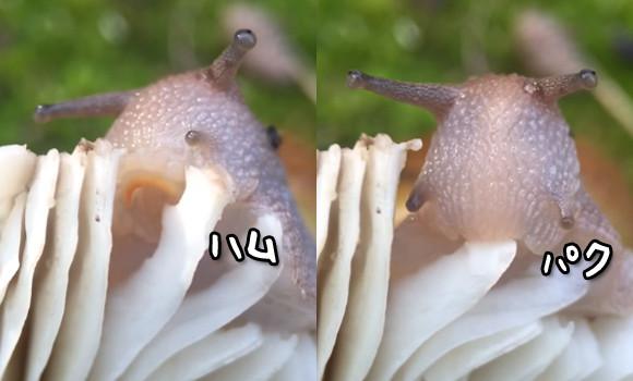 カタツムリの画像 p1_40