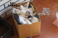 高密度で箱の中で眠る6匹の子猫。だがこの音を聞くと・・・