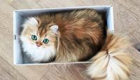 エメラルド色の瞳にノックダウン!カメラ目線を知っているスーパーフォトジェニックな猫、スムージーさんの場合。