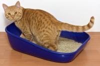 猫のフンに潜む寄生虫が卵巣ガン治療の秘密兵器に(米研究)