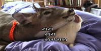 鹿なめずりでもうベチョベチョ。猫が好き過ぎる室内鹿のいる風景