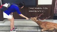 御馳走をもらってお辞儀をされたらお辞儀を返す。礼儀正しい奈良の鹿
