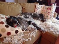 犬は人間の3倍の速さで生きてるもんだから・・・留守中に犬がやらかした室内の惨状