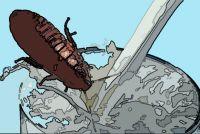 未来のスーパーフード候補はタンパク質豊富なゴキブリのミルク(ゴキブリ注意)
