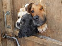 なんか刺さってる!壁や塀から頭だけ突き出した犬たちのいる風景
