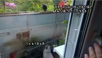 飼い慣らされた猫など敵ではない。全く逃げない鳩に対してネコ科の意地を見せる飼い猫