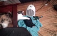 猫、初めての子犬を前に肉球チェック入ります!