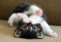 驚異の破壊力!ネット上をざわつかせた、世界のかわいい子猫選手たち