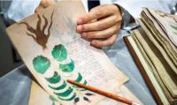 未だ解明ならず。謎に包まれたヴォイニッチ手稿の複製が満を持して制作中