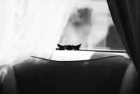 ミステリアスな猫の神秘的美しさはモノクロ写真にするとよくわかる