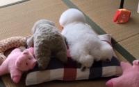 本体どっち?ぬいぐるみの横に寄り添う犬がぬいぐるみ以上にぬいぐるみだった。