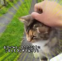 「来たニャ!今日もモフらせてあげるからそこで待ってて」 猫と郵便屋さんのほのぼのふれあいタイム