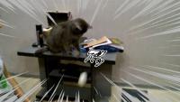 とにかく落としたいのにゃ。モノ落とす猫の所業総集編